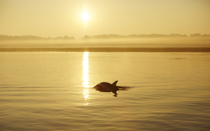Hilton Head dolphin at sunset