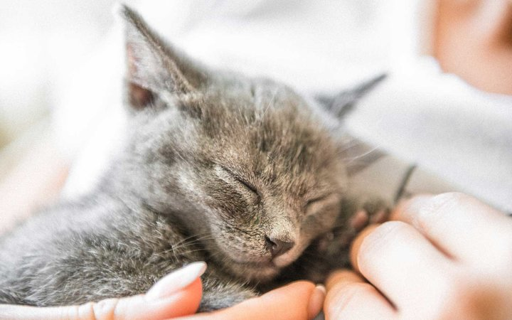 Kitten cuddling with person