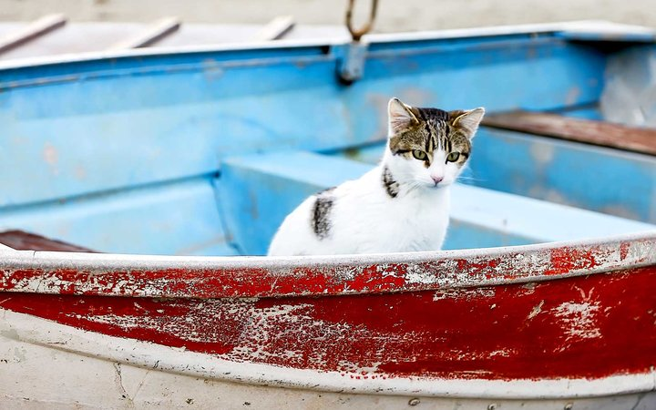 Cat in a boat on the island of Syros, Greece