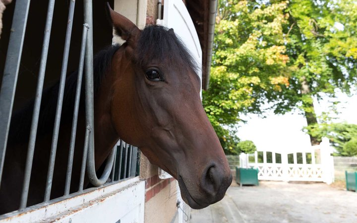 Racehorse stable, Chantilly, France