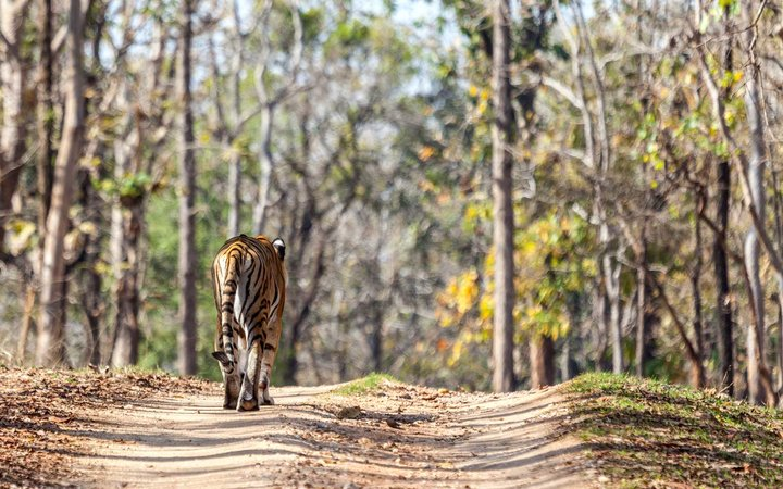 Baghvan Wilderness Lodge, Pench National Park India