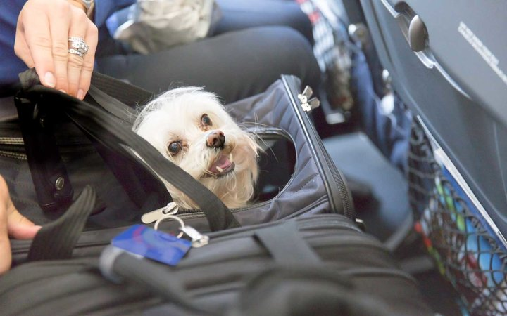 Age and flight time restrictions will now apply for emotion support animals and service animals.