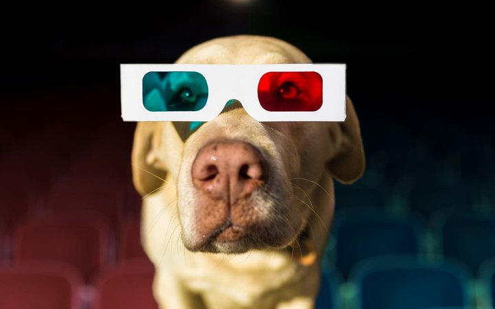 Yellow Labrador wearing 3-D glasses at theater