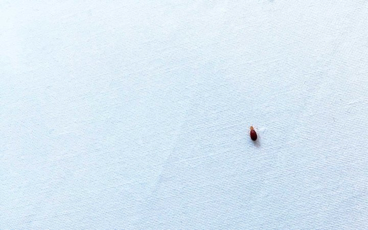 bed bug while traveling