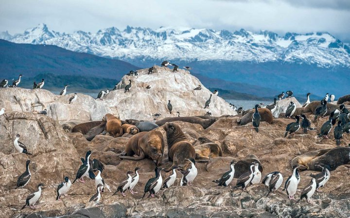 Penguins at Tierra del Fuego, Patagonia