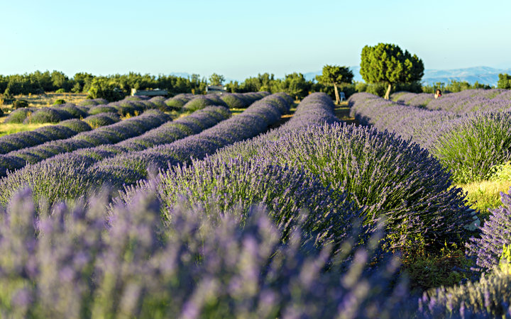 Turkey Lavender Village