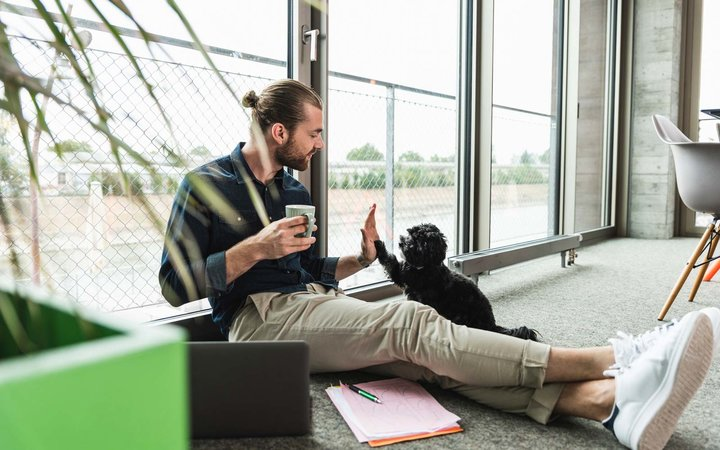 Young businessman with laptop sitting on the floor in office playing with dog