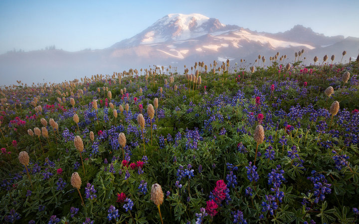 Mount Rainier wildflower bloom