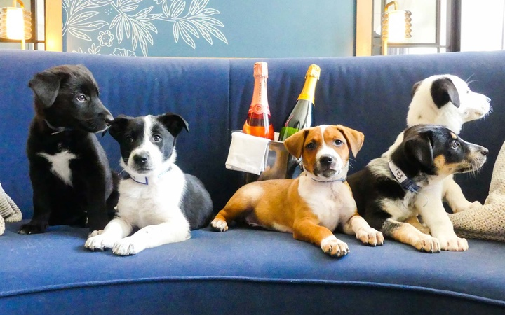 A Hotel in Denver Will Deliver Puppies and Prosecco to Your Room
