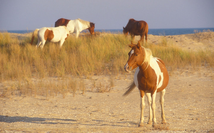 America's Best Little Beach Towns: Chincoteague