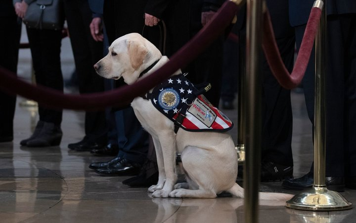 Service Dog Sully