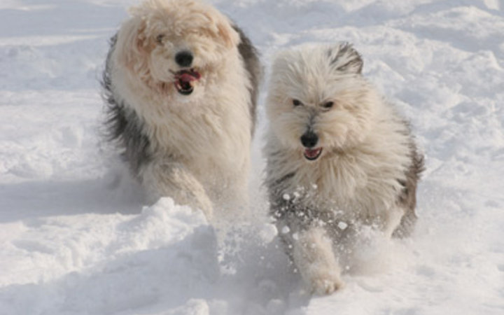 Image result for beautiful winter scenes