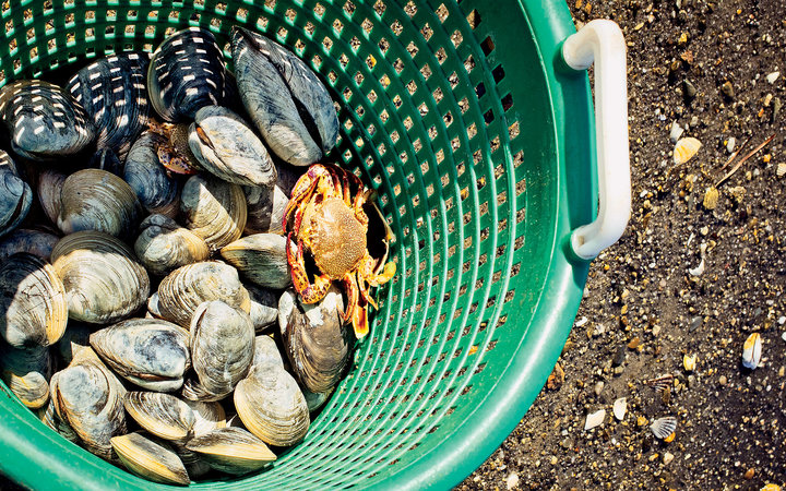 clams in a basket