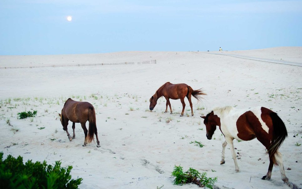 Assateague, Maryland
