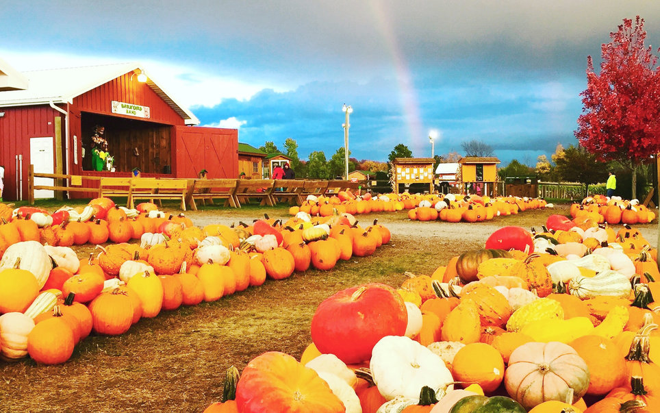 Roba Family Orchard Pumpkin Farm