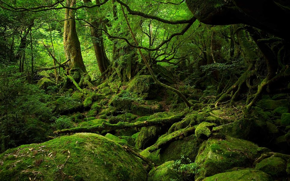 Why the Japanese Are Taking Forest Baths, and Why You Should, Too ...
