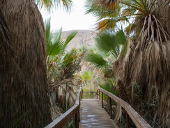 Coachella Valley Preserve in Palm Springs