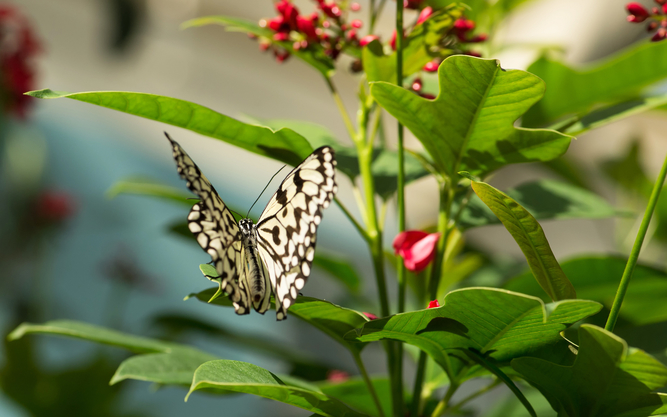 Judy Istock Butterfly Haven Museum in Chicago