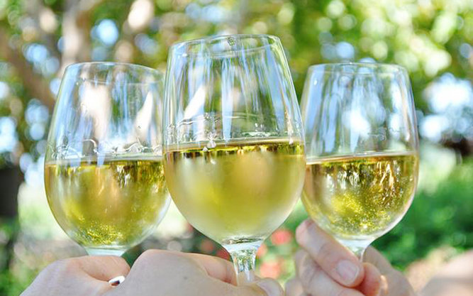 Texas Hill Country Wineries in Austin