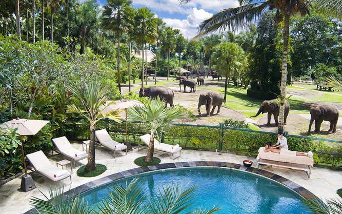 Elephant Safari Park Lodge Hotel in Bali