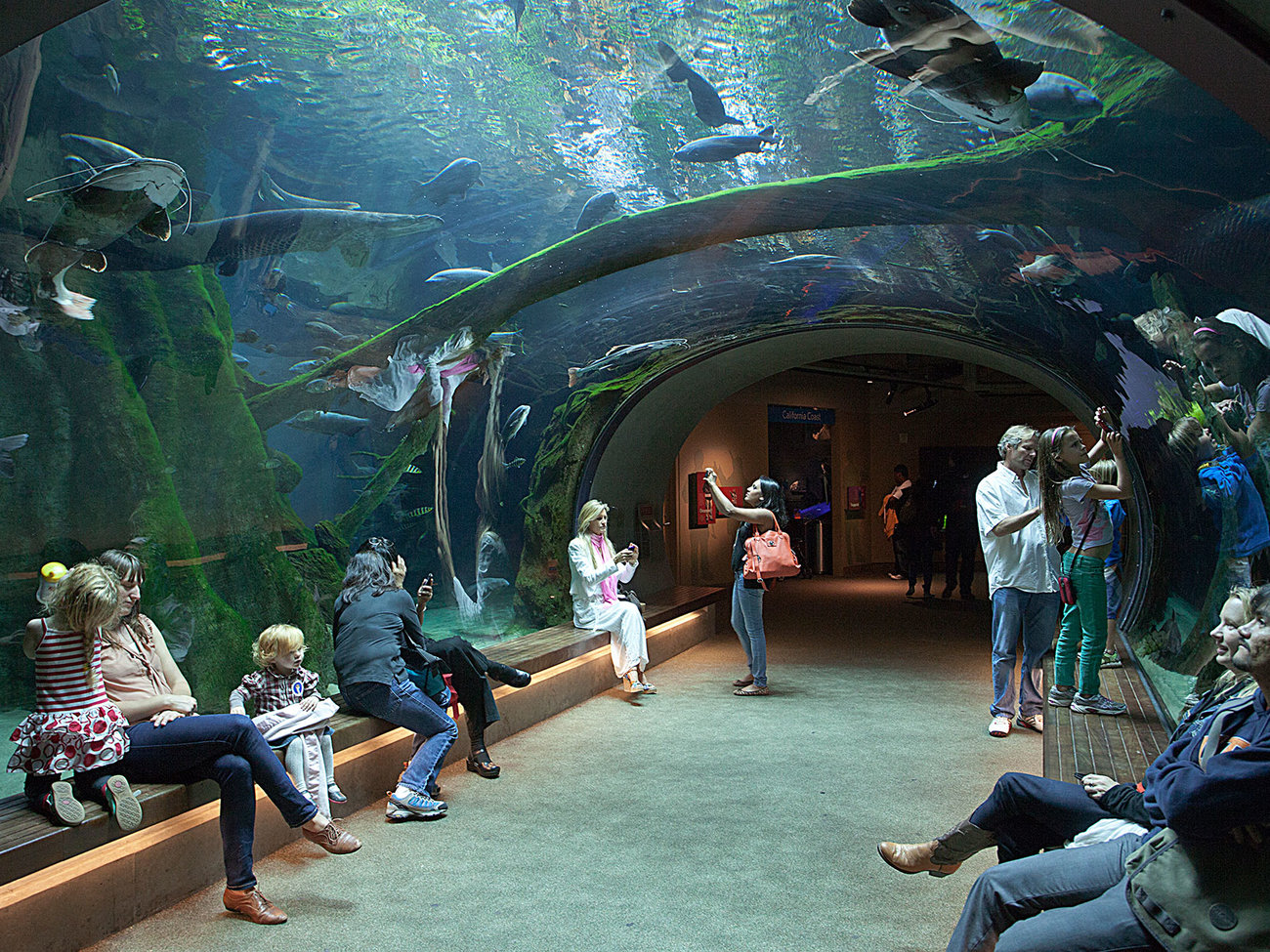 california academy of science The average salary for california academy of sciences employees is $61000 per  year visit payscale to research california academy of.