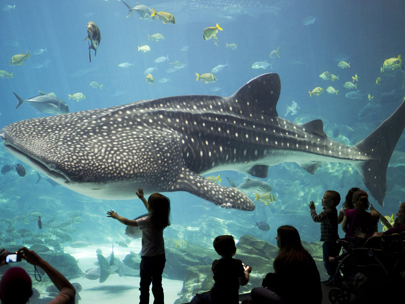Explore Atlanta with a CityPASS ticket booklet that saves 40% off admission to Georgia Aquarium Anytime Pass, plus 4 more top Atlanta attractions. It allows you to skip most ticket lines and is valid 9 days from the first booklet use.