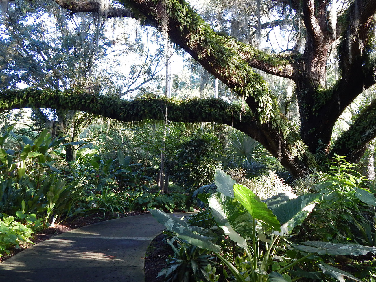 Harry P. Leu Gardens in Orlando