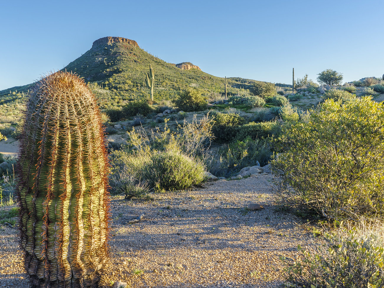 McDowell Sonoran Preserve in Scottsdale
