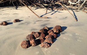 Hurricane Matthew Uncovers Civil War Cannonballs