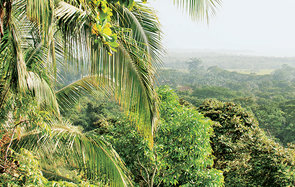 Lookout at Lapa Rios in Costa Rica Header
