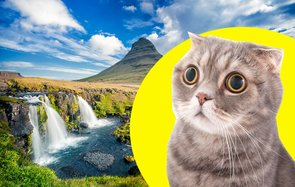 Don't smuggle your pet into Iceland