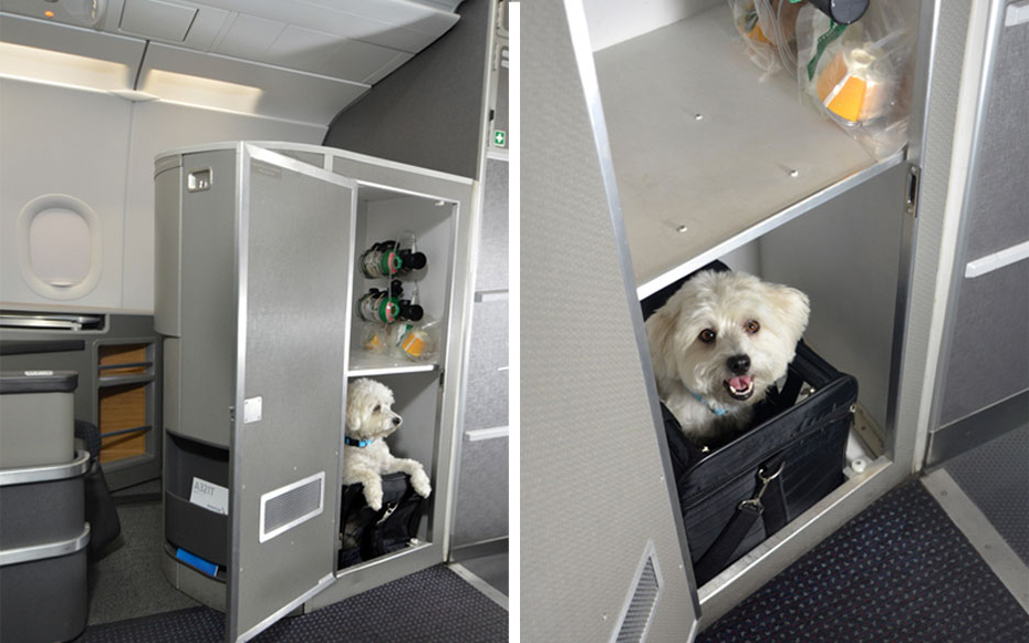 American airlines first class cabins for pets travel leisure for Air travel with dog in cabin