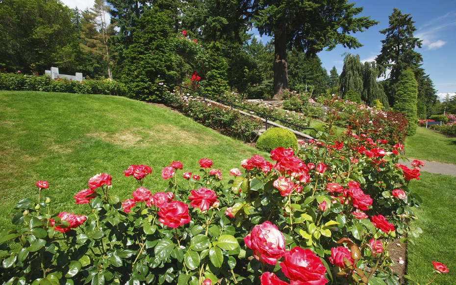 International rose test garden attractions travel leisure for Portland international rose test garden