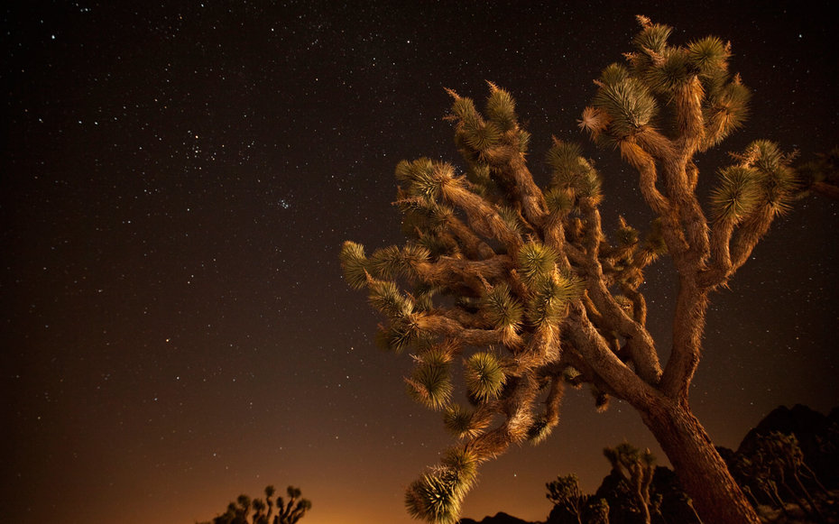 Joshua Tree California National Parks