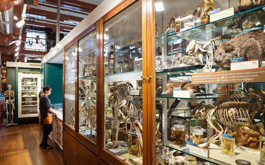 CWM1DH England, London, University College London, The Grant Museum of Zoology, Specimen Display Cases