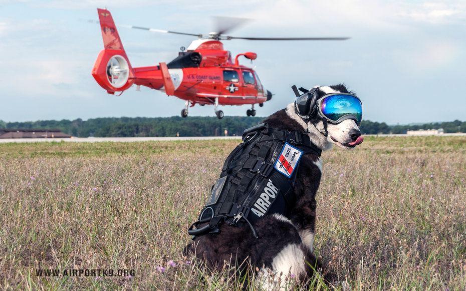 Piper the Cherry Capital Airport K-9 dog