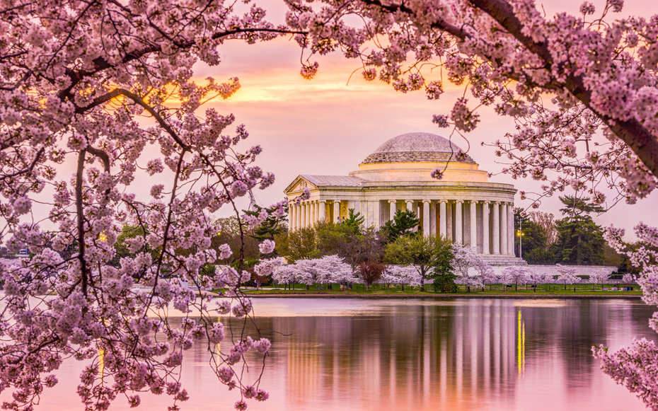 Image result for Cherry Blossom in DC Photo  s