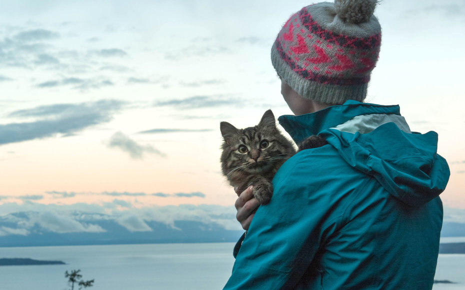 Image result for Are the records there? while traveling with pet