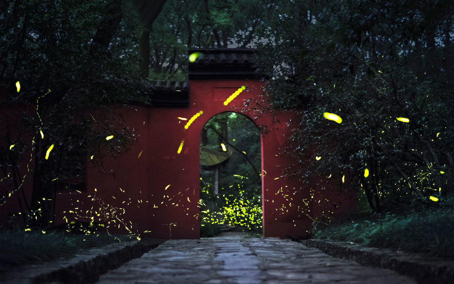 Experts fear firefly populations are dwindling