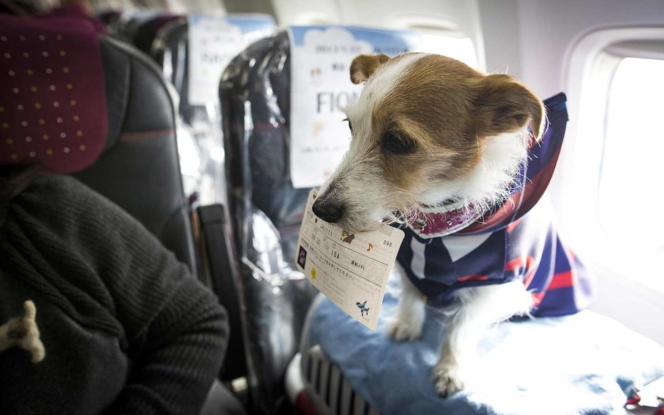 This dog friendly airline is an animal lover s dream come for Air travel with dog in cabin