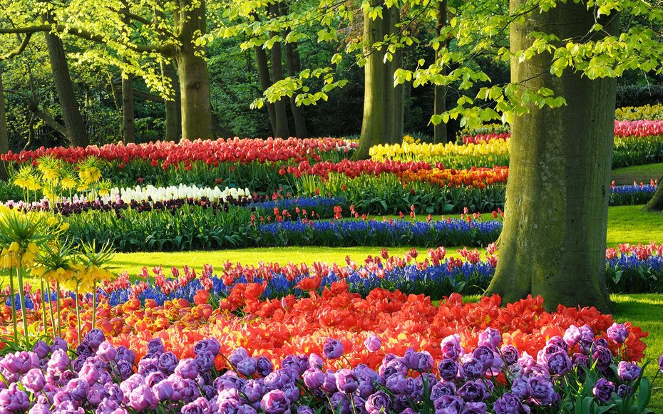 Keukenhof Gardens, Lisse, Holland, Netherlands, Europe