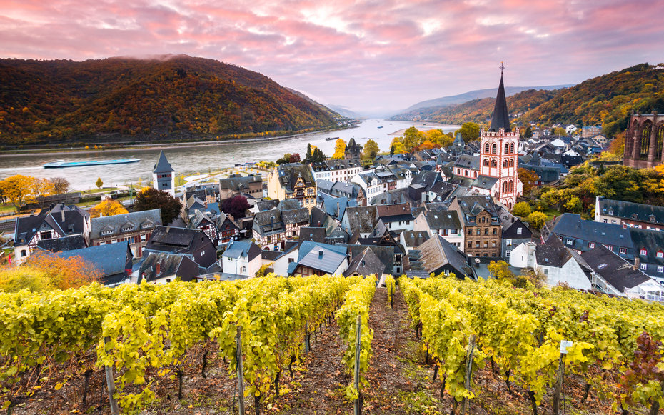 A vineyard looking down on Rudesheim, by the Rhine.