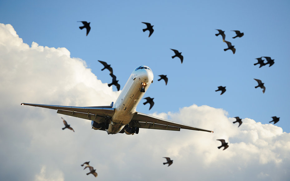 Birds and an Airplane