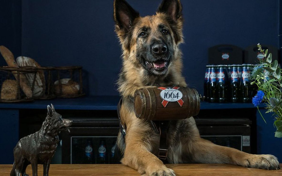 Dog serves Kronenbourg 1664 beer in London