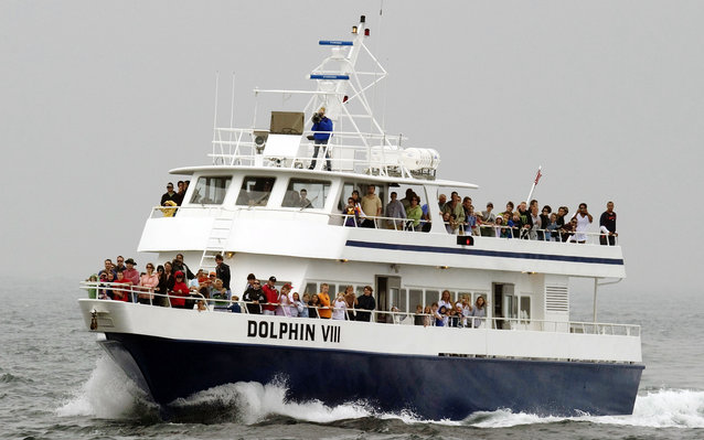 Dolphin Fleet Whale Watch in Cape Cod