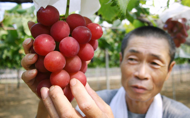 Japanese Grapes