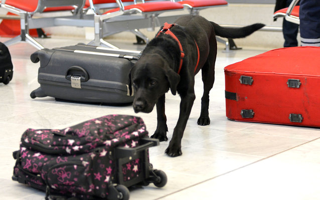 Bomb dogs failed dozens of tests at U.S. airports