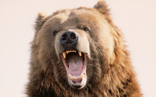 Canadian Man Survives Bear Attack with Wine Bottle