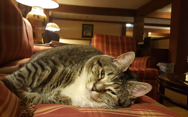 31lbs Lives At Best Western in New Hampshire