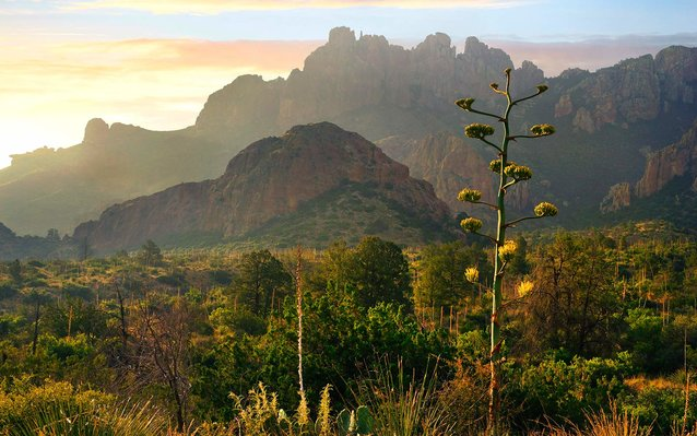 A Guide to Big Bend National Par